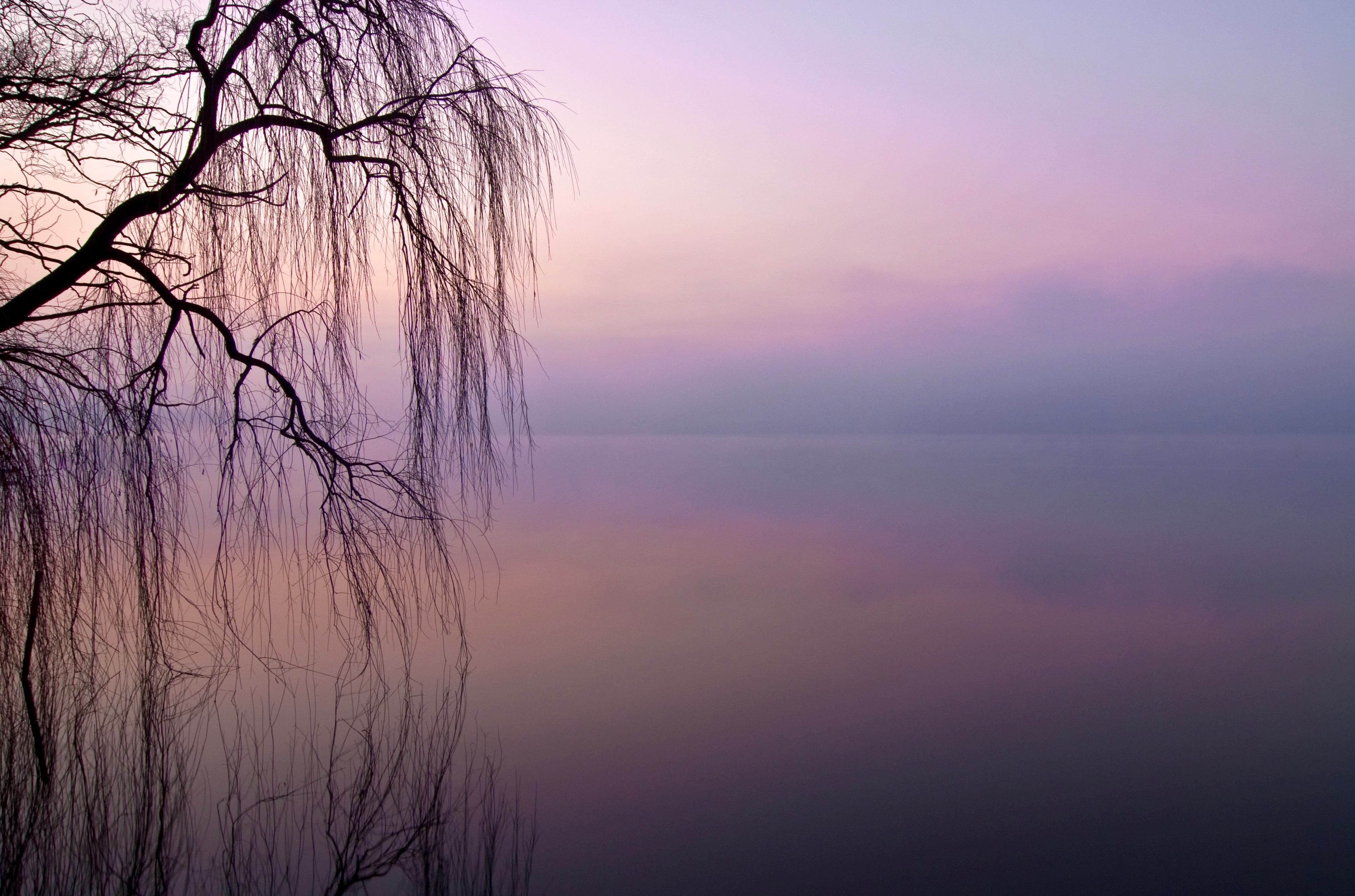 Lone Willow